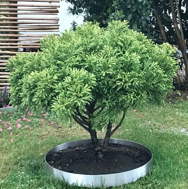 Edelstahl Beetumrandung Pflanzenring Garten