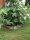 Beetumrandung PR300 Pflanzenring Beeteinfassung Rasenkanten Edelstahl V2A 300mm