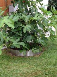 Beetumrandung PR700 Pflanzenring Beeteinfassung Rasenkanten Edelstahl V2A 700mm